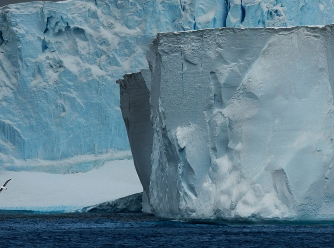 2-Iceburgs-with-albatross