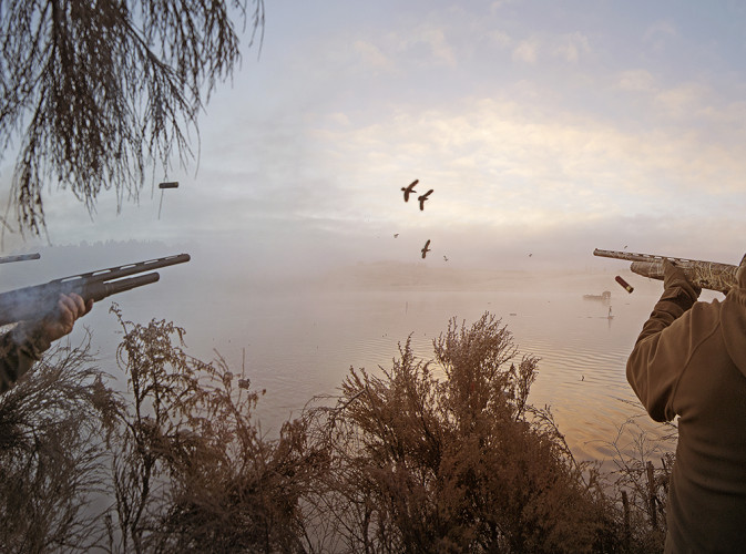 Ducks 3 W